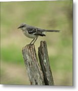 Perched On An Old Fence Metal Print
