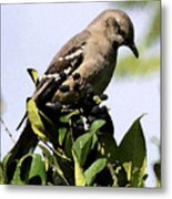 Mockingbird On Berries Metal Print