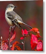 Mockingbird On Red Metal Print