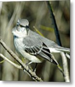 Mockingbird Side Glance Metal Print