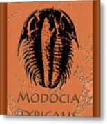 Modocia Typicalis Fossil Trilobite Metal Print