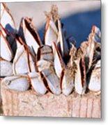 Mollusks On Wood Plank Metal Print