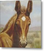 Molly Mule Foal Metal Print by Dorothy Coatsworth