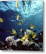 Molokini Snorkeling Couple Metal Print