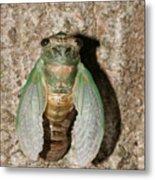 Molting Cicada #2 Metal Print