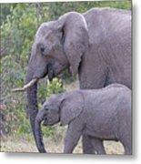 Mom And Baby Elephant Metal Print