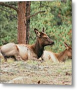 Mom And Kids Taking A Nap Metal Print