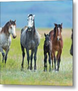 Mom, Dad, And Two Colts Metal Print