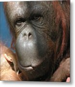 Mom Protection Metal Print