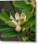 Moments On The Magnolia Metal Print