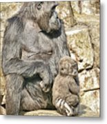 Momma And Baby Gorilla Metal Print