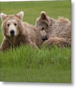 Momma And Cub Metal Print