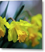 Mom's Daffs Metal Print