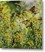 Monarch 6 Metal Print