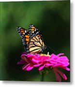 Monarch 7 Metal Print