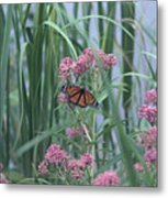 Monarch And Pink Metal Print