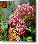 Monarch Arc Metal Print