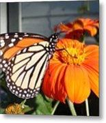Monarch Butterfly 2 Metal Print
