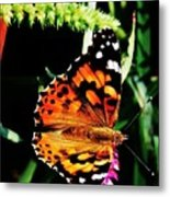 Monarch Butterfly # 2 Metal Print