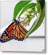 Monarch Butterfly In The Garden 3 Metal Print