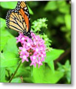 Monarch Butterfly And Honey Bee Metal Print