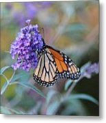 Monarch Butterfly And Purple Flowers Metal Print