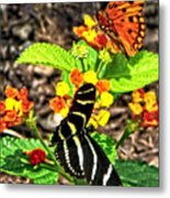 Monarch Butterfly And Zebra Butterfly Metal Print