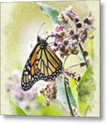 Monarch Butterfly Blank Note Card Metal Print