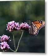Monarch Butterfly IIi Metal Print