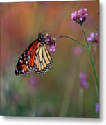 Monarch Butterfly In Autumn 2011 Metal Print