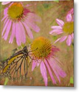 Monarch Butterfly In Pink Metal Print