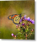 Monarch Butterfly In The Afternoon Sun Metal Print
