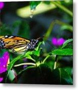 Monarch Buttefly Metal Print