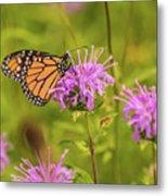 Monarch Butterfly On Bee Balm Flower Metal Print