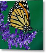 Monarch Butterfly On Flower Blossom Metal Print
