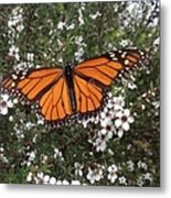 Monarch Butterfly On New Zealand Teatree Bush Metal Print