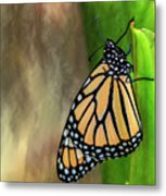 Monarch Butterfly Poised On Green Stem Metal Print