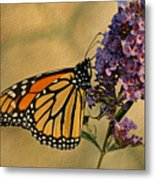 Monarch Butterfly Metal Print by Sandy Keeton