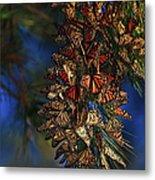 Monarch Cluster Metal Print