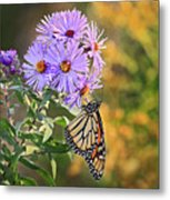 Monarch Feeding Metal Print
