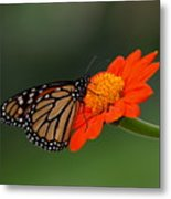 Monarch Glow Metal Print