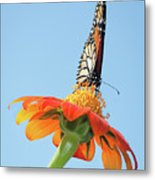 Monarch I Metal Print