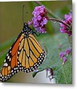 Monarch In The Rain Metal Print