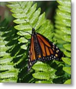 Monarch On A Fern Metal Print