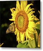 Monarch On A Sunflower Metal Print