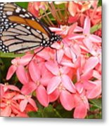 Monarch On Huneysuckle Metal Print