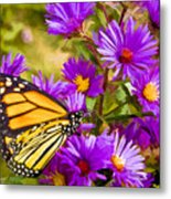 Monarch On Mt. Washington Metal Print