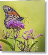 Monarch On Pink Flower Metal Print