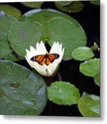 Monarch On Waterlily Metal Print