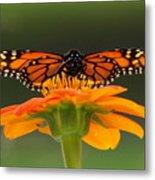 Monarch Orange Metal Print